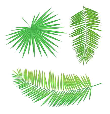 Palm branch set, long and round leaves with sharp edges isolated hand drawn green foliage. Summer beach theme banner, vector placard sample.