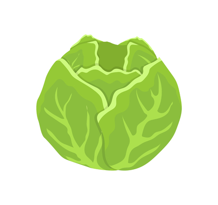 Green cabbage head cartoon isolated vector icon. Round vegetable, leaves and cob or stalk, salad veggie, farm and agriculture theme, grocery vegetarian