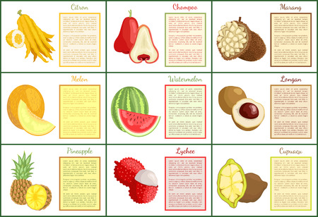 Citron and chompoo posters set with text sample vector. Tropical fruits watermelon, pineapple and lychee, cupuacu and melon marang. Exotic food slices Illustration