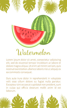 Watermelon or citron melon berry, ripe tropical plant vector poster with text sample and palm leaves. Food with seeds or seedless edible fruit whole and cut 向量圖像
