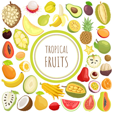 Tropical Fruits Exotic Meal Avocado Durian Vector