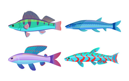 Mackerel blue fish fauna set with body spots . Limbless animals living in tropical places. Creatures with dorsal fins isolated on vector illustration