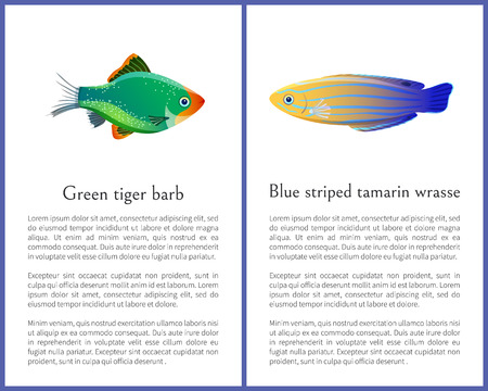 Green tiger barb and blue striped tamarin fishes isolated on white background ocean citizen with flexible paddles and sparkling multicolored skin