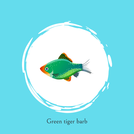 Green tiger barb in white circle isolated on blue. Freshwater aquarium fish silhouette icon on double color background cartoon vector illustration