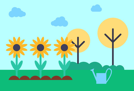 Field with growing sunflowers. Flowers giving oil in blossom in ground. Margin with grass trees, farming watering can in distance, rural landscape vector
