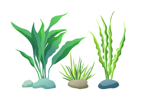 Illustration vectorielle de types d'algues de mer ou d'aquarium sur blanc. Algue droite et ondulée avec affiche de couleur verte et violette à grandes et petites feuilles. Vecteurs
