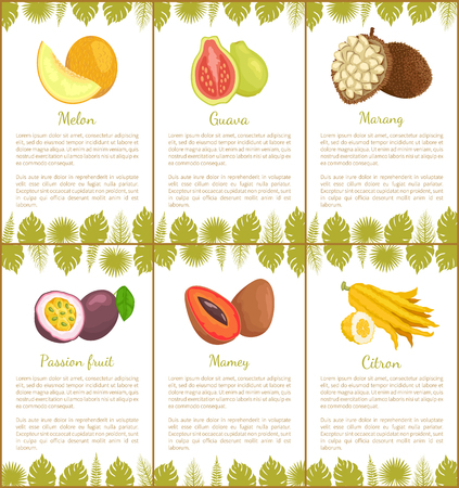 Melon and guava, marang and passion fruit, mamey and citron tropical posters set with exotic fruits and leaves vector illustration with text sample
