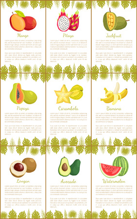 Mango and Pitaya Carambola Posters Set Vector Illustration