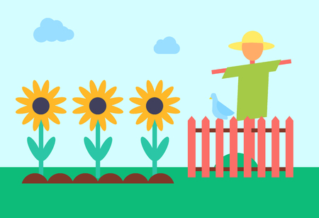 Scarecrow bogey and sunflowers field. Bugaboo enclosed with wooden fence protecting crop from crows. Golliwog on farm and plants in ground vector