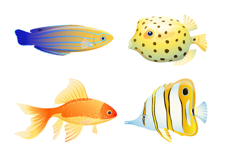 Blue striped tamarin wrasse, gold and butterfly, box fish. Rare marine creature specie color vector illustration isolated on white maritime poster.