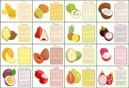Citron and bael posters set text sample and tropical fruits vector. Melon and papaya, mangosteen and mamey, ambarella and pineapple cupuacu coconut Stock Vector - 127558787
