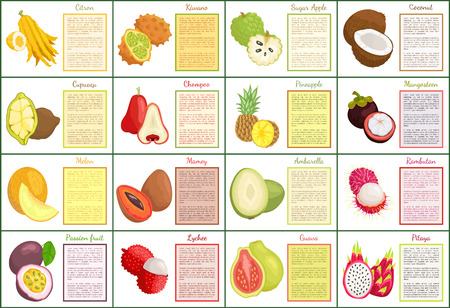 Citron and Bael Papaya Melon Posters Set Vector Banco de Imagens