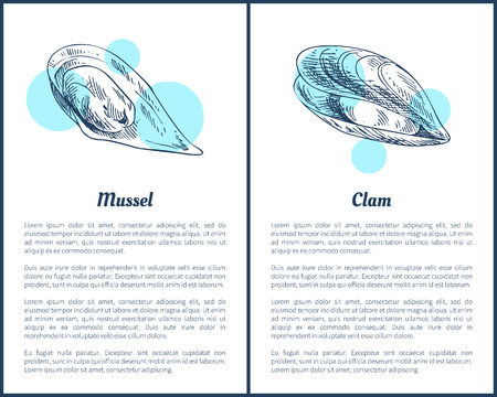 Mollusk and Clam Posters Set Vector Illustration