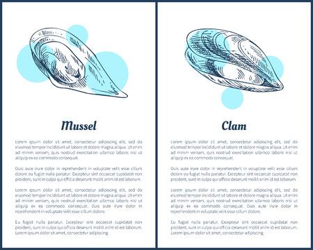 Mollusken- und Muschel-Poster-Set Vektor-Illustration