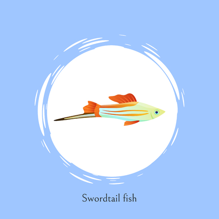 Swordtail fish in white circle isolated on blue. Freshwater aquarium fish silhouette icon on double color background cartoon vector illustration. Illustration