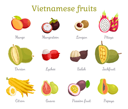 Vietnamese Tropical Fruits Set Vector Illustration