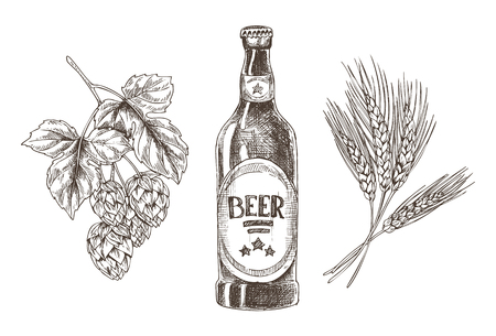 Hop and Wheat Bunches Isolated Beer Ingredients Illustration