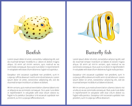 Boxfish and Butterfly Fish Isolated on White Icons