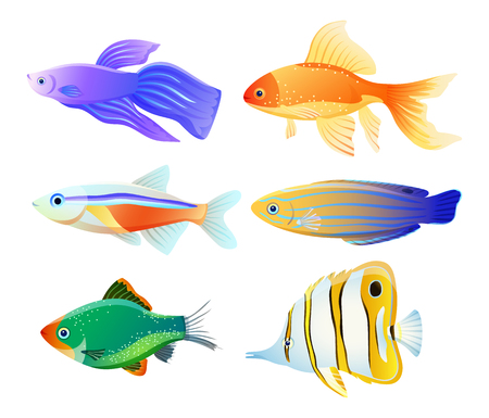 Variety fish specie color flat vector illustration set. Sea or ocean creature as domestic aquarium animal depiction idea for educational magazine.