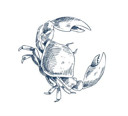 Krab mieszkaniec wody słodkiej i lądowej. Monochromatyczne przedstawienie morskiego stworzenia skorupiaka w stylu szkicu na białym tle. Pomysł na morski plakat promocyjny.