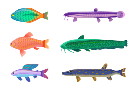 Jewel cichlid and brook trout fish. Tropical cold-blooded animals with no limbs living in water. Different types of sea creatures vector illustration