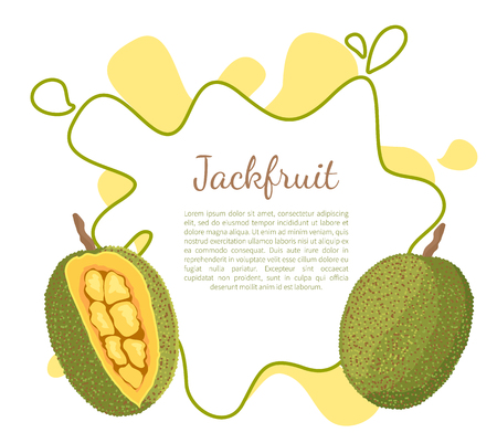 Jackfruit Exotic Juicy Stone Fruit Vector Isolated Standard-Bild - 112468883