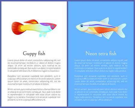 Guppy and Neon Tetra Fish Isolated on White Icons Illustration