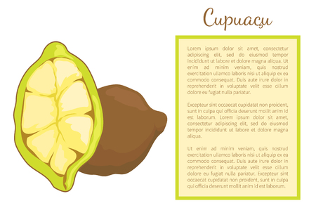 Cupuacu exotic cupuassu, cupuazu and copoasu, tropical rainforest fruit whole and cut. Cacao dieting vegetarian food vector poster frame and text.