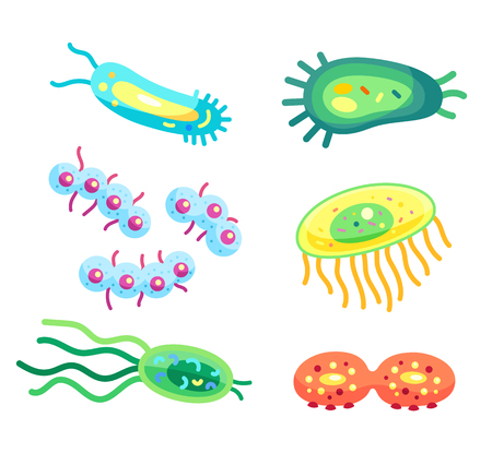 Bacteria closeup virus cells, microbes vector icons. Colorful microorganisms with long tails, organelles and flagella, dividable and whole germs isolated