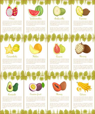 Pitaya and Watermelon Marang Citron Posters Vector Stock Vector - 112468898