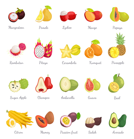 Mangosteen and Papaya Avocado Set Vector