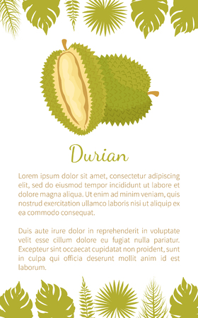 Durian exotic juicy fruit with unusual flavour and odour vector poster text and palm leaves. Tropical edible food, dieting veggies icon full of vitamins Ilustração