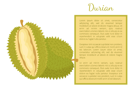 Durian exotic juicy fruit with unusual flavour and odour vector poster with frame and text sample. Tropical edible food, dieting vegetarian banner