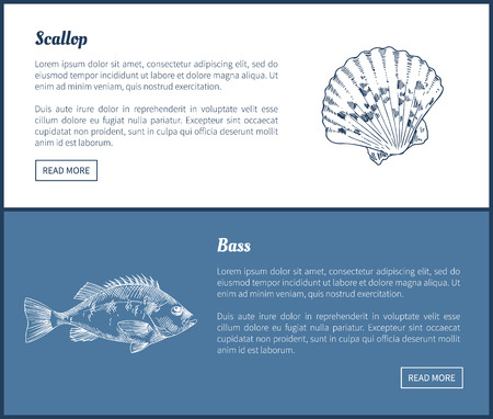 Bass and Scallop Vector Double Color Graphic.