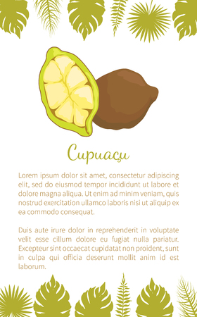 Cupuacu exotic cupuassu, cupuazu and copoasu, tropical rainforest fruit related to cacaovector poster with text sample and palm leaves. Dieting vegetarian icon, edible Foto de archivo - 127461952