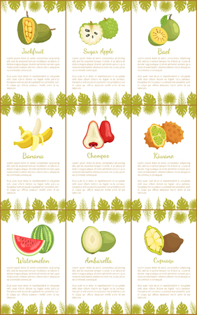 Jackfruit and Sugar Apple Bael Fruits Set Vector Illustration