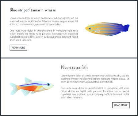Blue Striped Tamarin Wrasse Vector Illustration