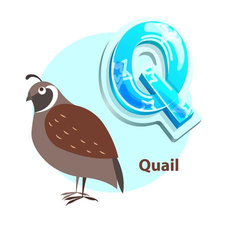 Oiseau de caille pour vecteur de représentation de lettre Q. Une nouvelle idée pour des cours d'alphabet agréables et divertissants avec des enfants d'âge préscolaire. Vecteurs
