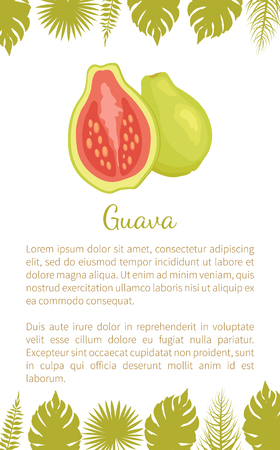 Guava or pineapple guavas exotic juicy fruit vector poster text sample and leaves. Tropical edible food, dieting veggies full of vitamins with eatable flesh 일러스트