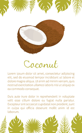 Coconut exotic fruit vector poster with text sample and palm leaves. Tropical food, plant in brown shell, dieting milk for cocktails inside, coco icon Standard-Bild - 127420456