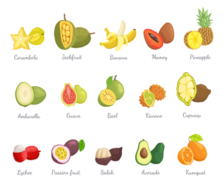 Lychee and carambola set with names and tropical fruits vector. Pineapple and cupuacu, bael and mamey salak and avocado, kumquat and kiwano ambarella