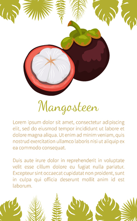 Purple mangosteen exotic juicy fruit vector poster text sample and palm leaves. Tropical edible food, dieting vegetarian plant with endocarp white inside Illustration