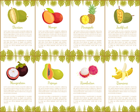 Durian and Mangosteen Slices Posters Set Vector Illustration