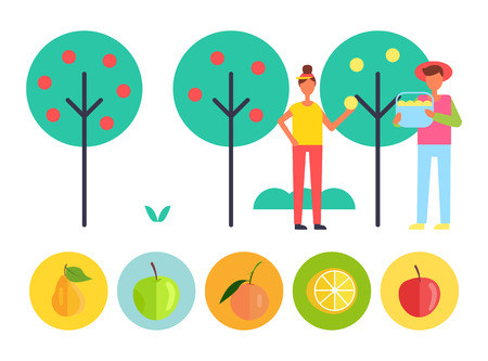 Harvesting people and fruit trees with ripe apples and pears, lemons and peaches. Farmers gathering products to bucket. Icons of harvest results vector Imagens - 112716759
