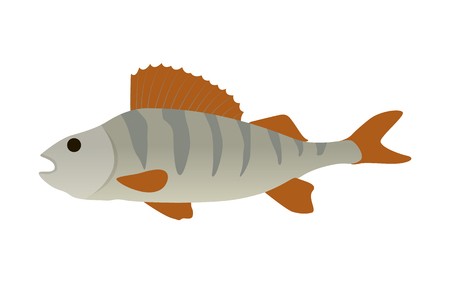 Fish with fins and gills. Closeup of icon of water animal with no limbs. Vertebrate body of marine or river dweller isolated on vector illustration