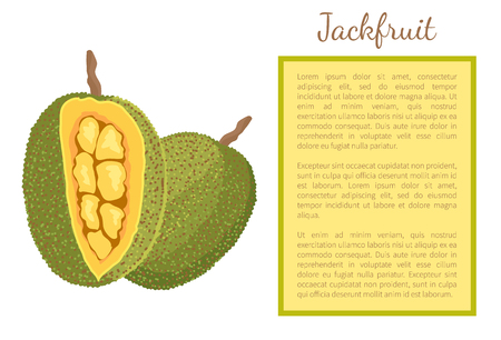 Jackfruit Exotic Juicy Stone Fruit Vector Poster Stock Photo