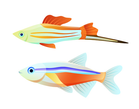 Neon tetra and swordtail fish isolated on white Illustration