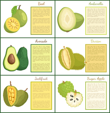 Bael and ambarella posters set with text and green fruits vector. Exotic meals sweet sugar apple jackfruit. Avocado and durian healthy organic food Illustration