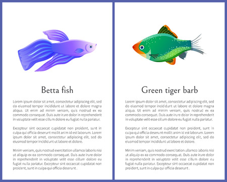 Betta Fish with Green Tiger Barb Vector Posters