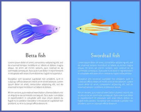 Betta fish and swordtail fish icons double color. Freshwater aquarium pets on blue and white color background in cartoon style vector illustration Imagens - 127385894